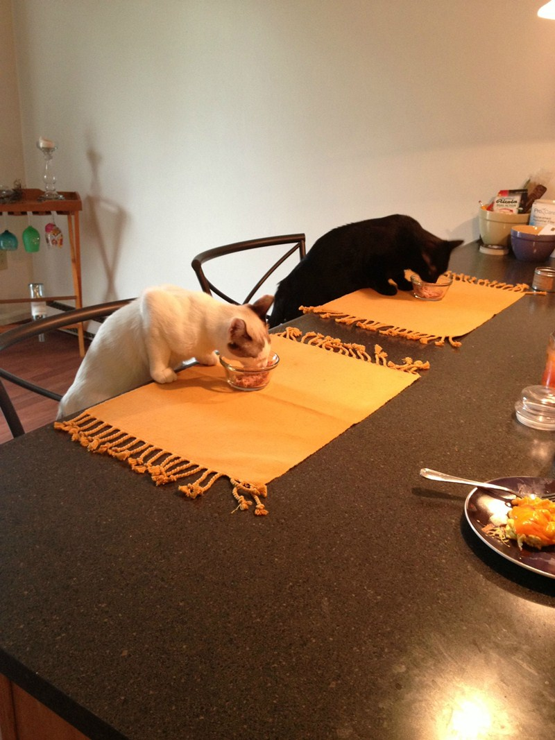 cat pictures, cat photos, cats eating on table
