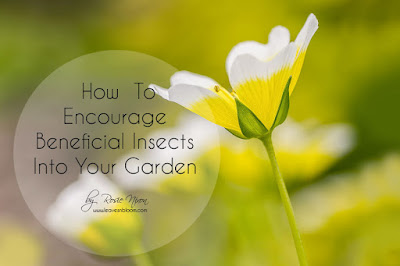 how to encourage beneficial insects into your garden