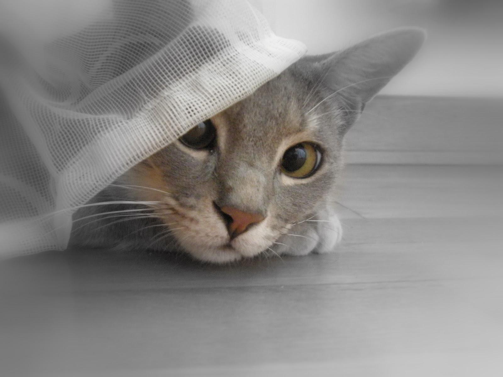 Tittivaniglia for Il gatto inverno