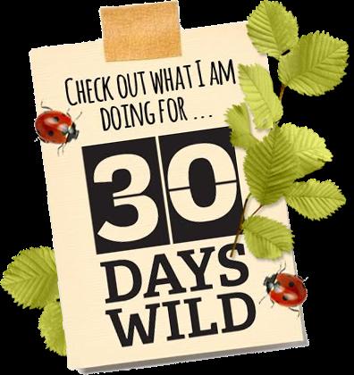 #30DaysWild 2017