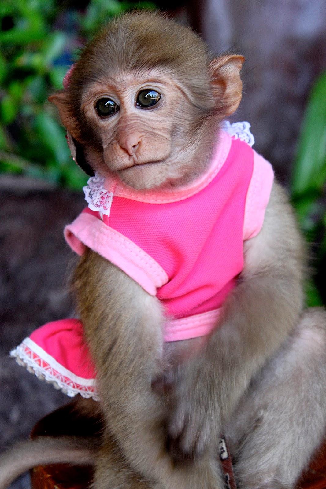 Baby Monkeys Dressed Up | www.pixshark.com - Images ...