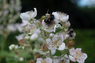 Do some good and plant bee friendly