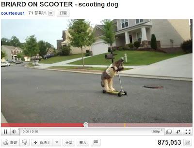 牧羊犬溜滑板車