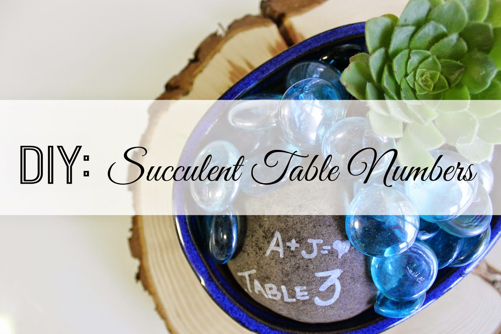 NM Dream Wedding Giveaway: DIY: Succulent Table Numbers