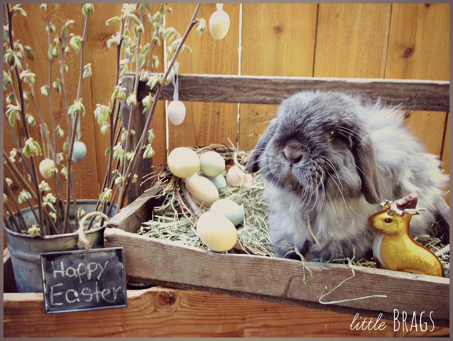 Easter Bunny Fun Shop - Events - Ocean City Maryland Real easter bunny photos