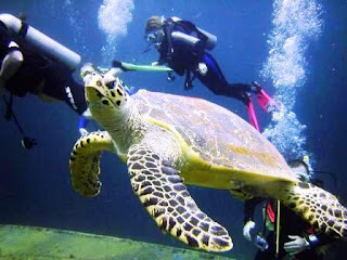scuba diving in Tulamben, healthy life, exercise, adventure in Bali