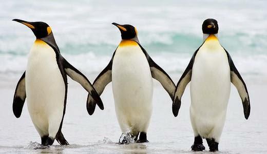 Arti Mimpi Pinguin