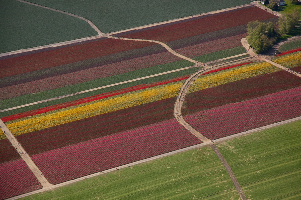 Flying over the tulips, photo by Craig: