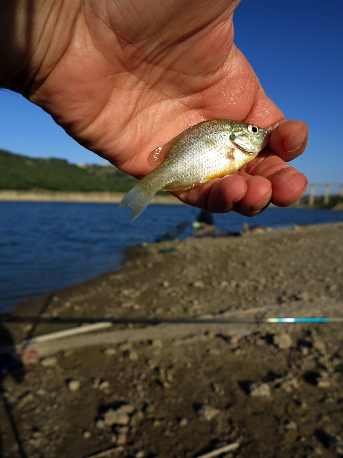 Ricerca sul lago piccolo fritto il russo che pesca 3