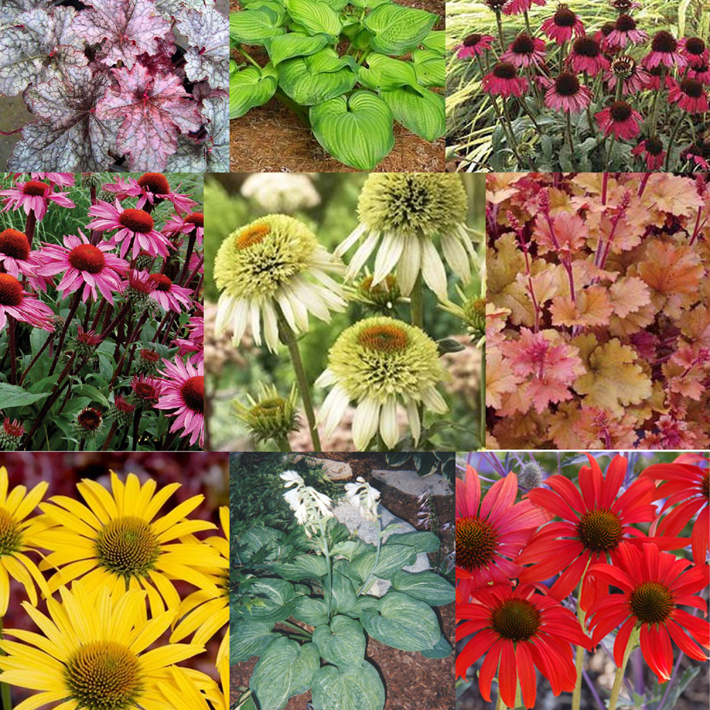Different types of flowers with pictures and names for Different garden plants