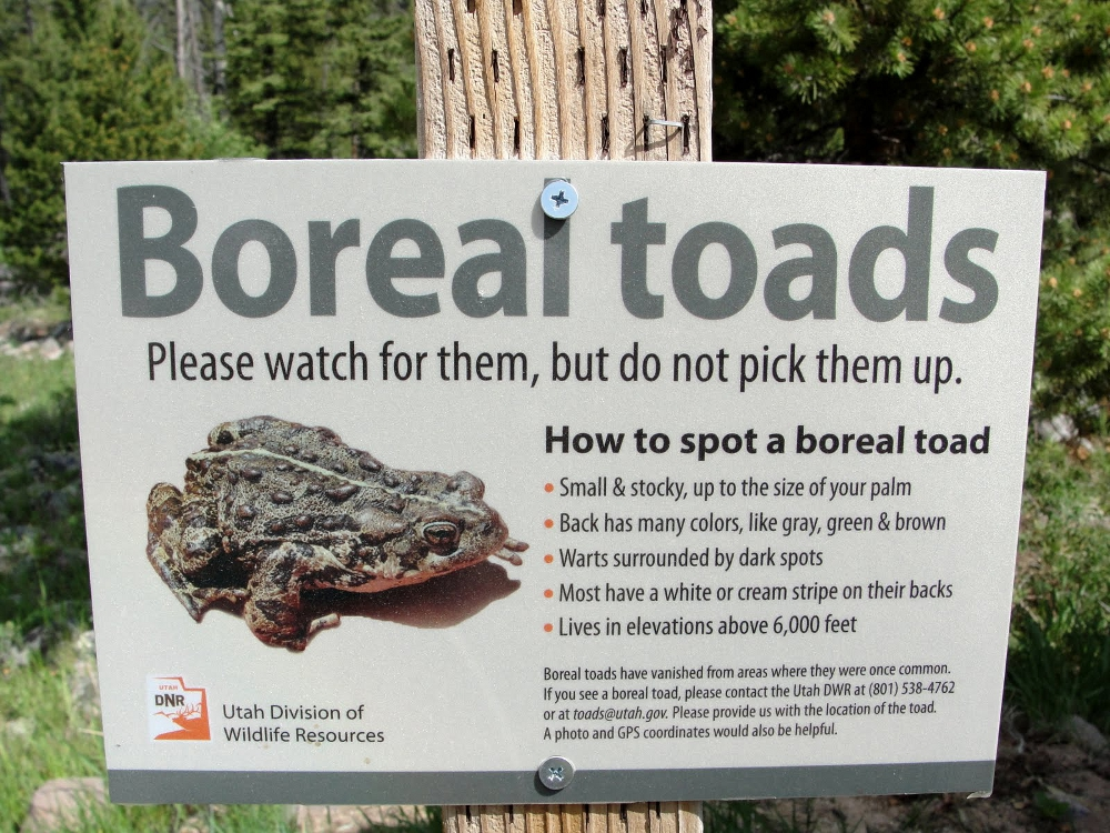 Behind the glass a future for utahs toads reporting sightings can help further boreal toad research and efforts to understand more about what is happening to them and help stop their disappearance sciox Choice Image