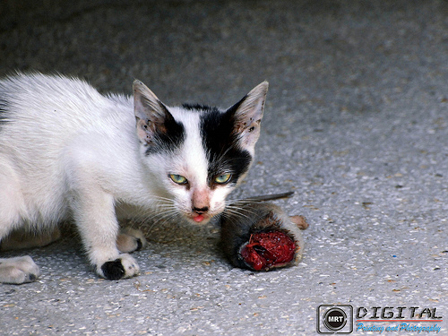 Should Cats Eat Single Protein