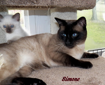 Simone . our sire  he is almost 2 yrs old.