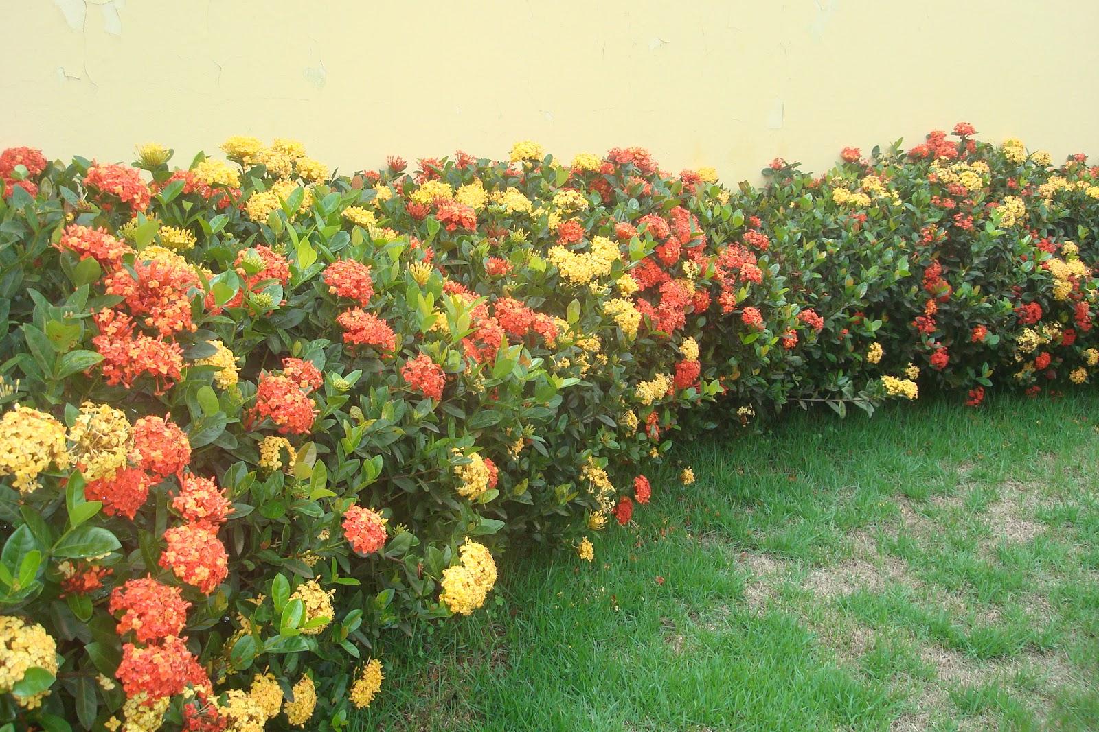 Orqu deas fonte de terapia for Plantas ornamentales croto
