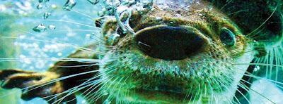 Tennessee Aquarium Blog