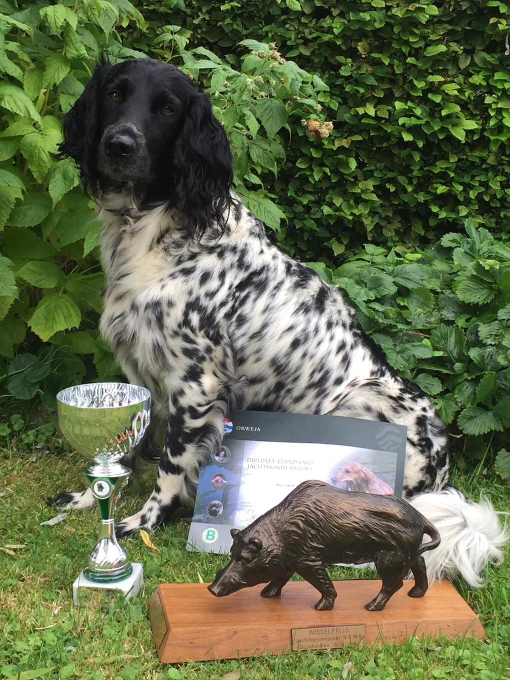 Winnaar van Het Zwijn 2019