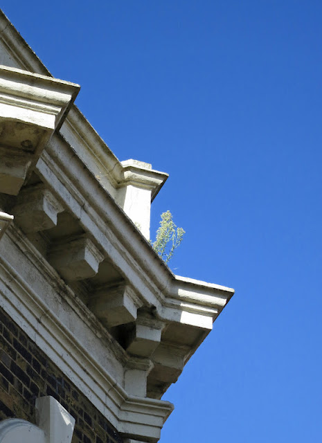 Plant growing on the top of a tall building