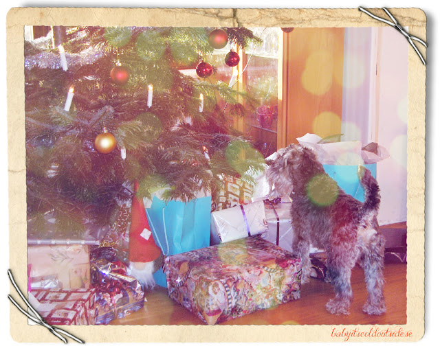 schnauzer, christmas tree