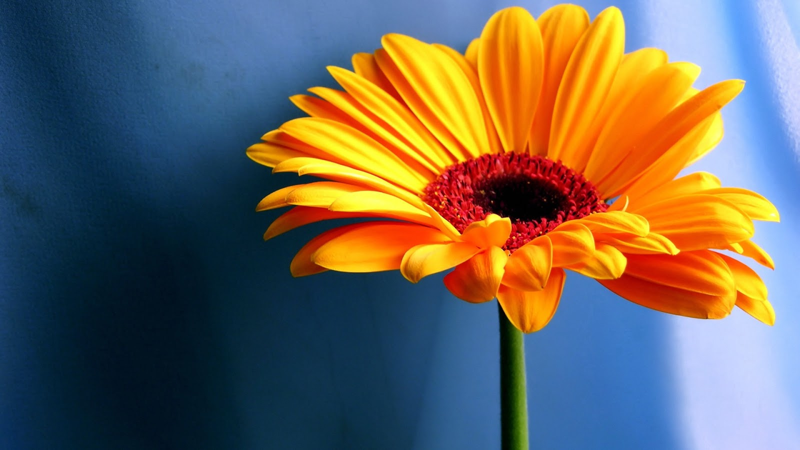 yellow color flower images All free download  - yellow color flowers wallpapers
