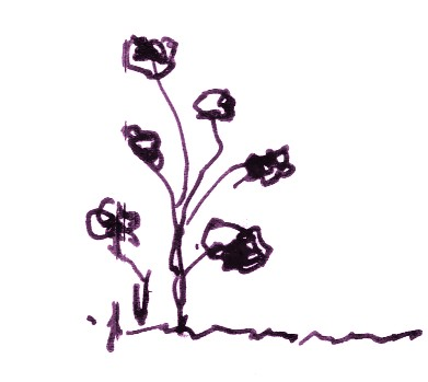 Nuevas hierbas