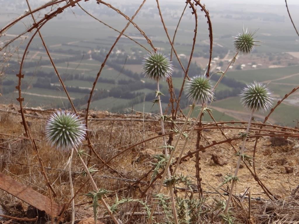 Wzgórza Golan - Izrael