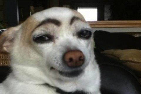Image: Dogs-with-human-eyebrows-1-480x319.jpg