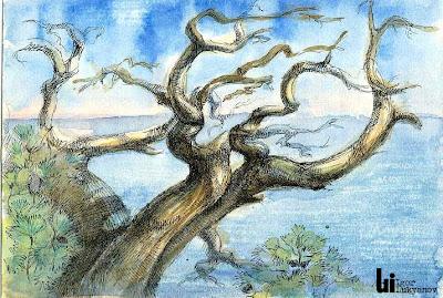 arbre pin de la Crimée