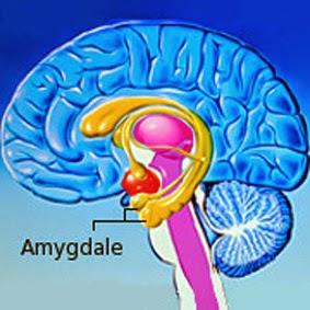 Cmo funciona el cerebro adolescente? - Batanga