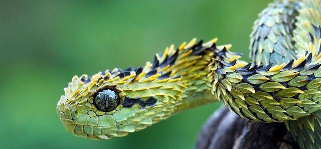 Reptiles y biologia