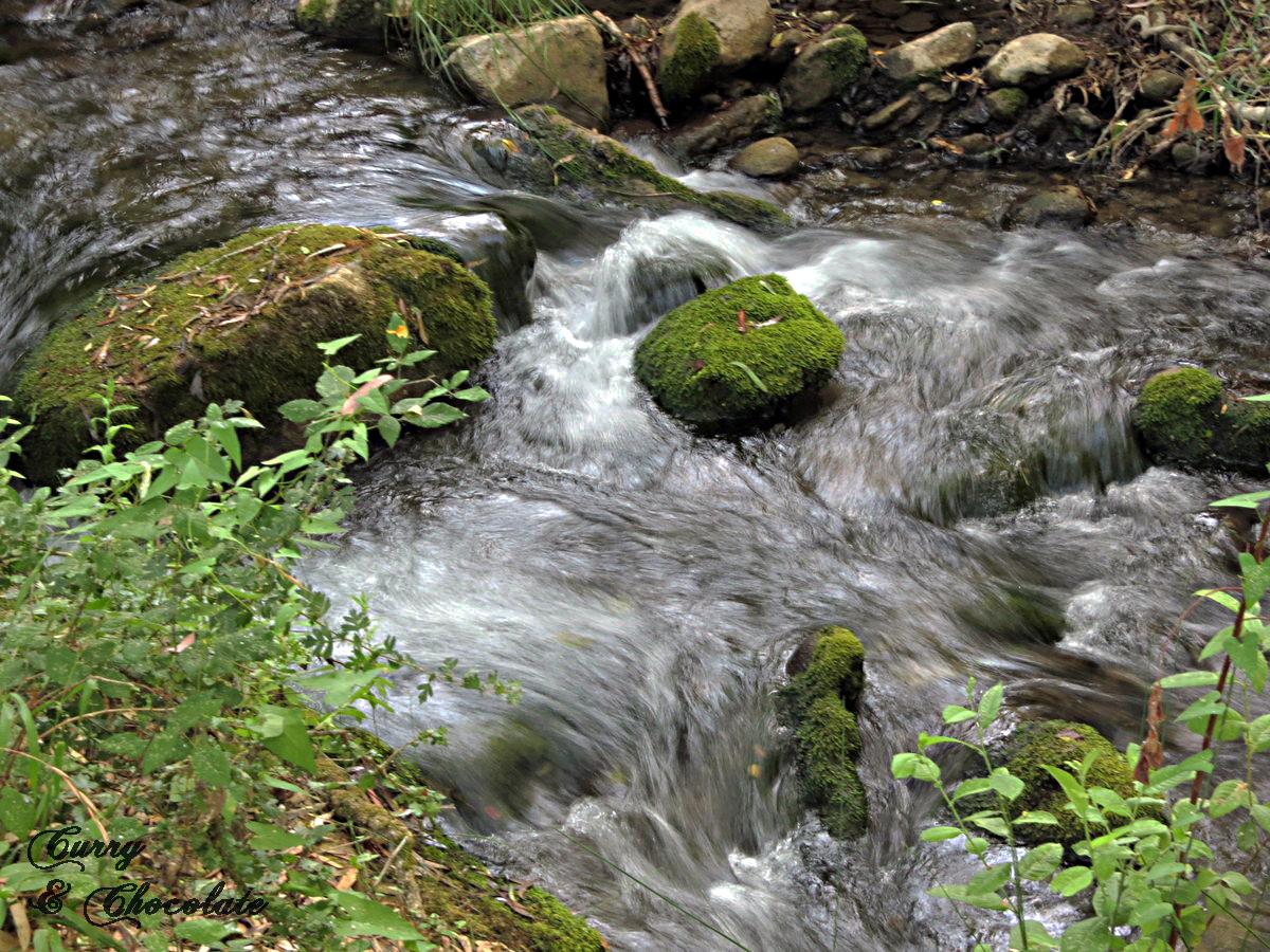El Bosque (ruta del río Majaceite)
