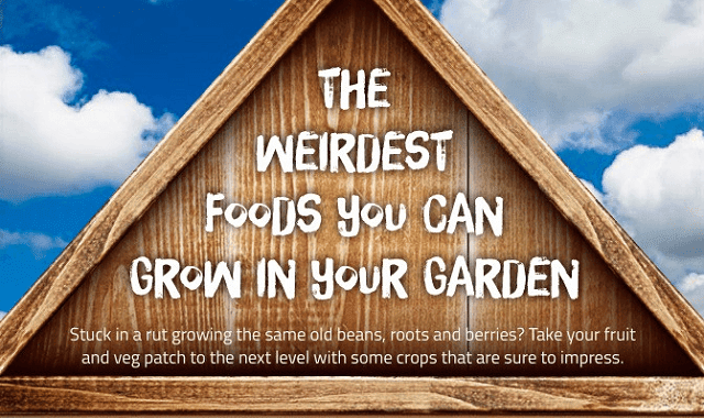 Image: The Weirdest Foods You Can Grow in Your Garden