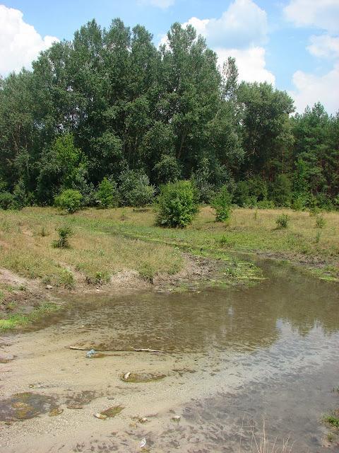 Вода из родника, текущая в лес, а оттуда в реку