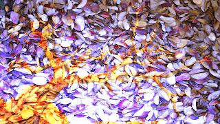 5 Arvore_despida_ sobre texturas de folhas_Subexposição de cor_255