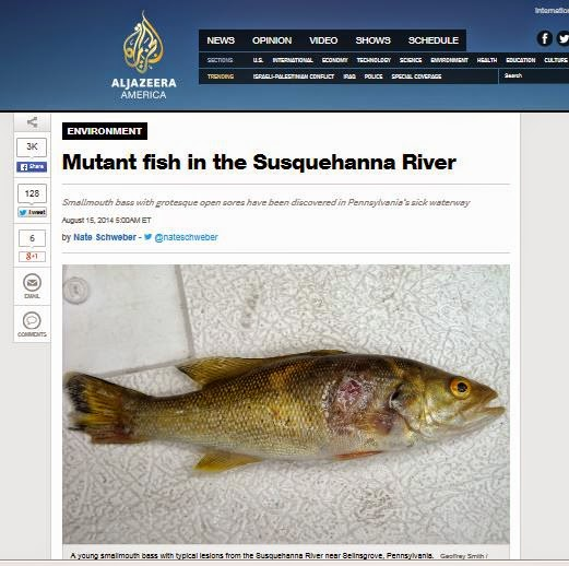 Mutant Fish in Susquehanna....Again?