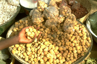 African desert dates are drought-tolerant plants providing food in Africa's drought-prone countries.