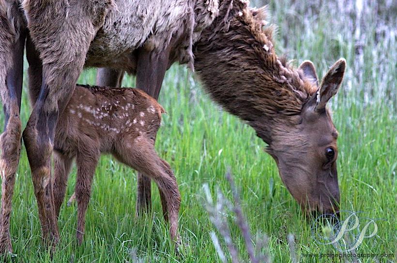 Animal Zoo Life: mamma...