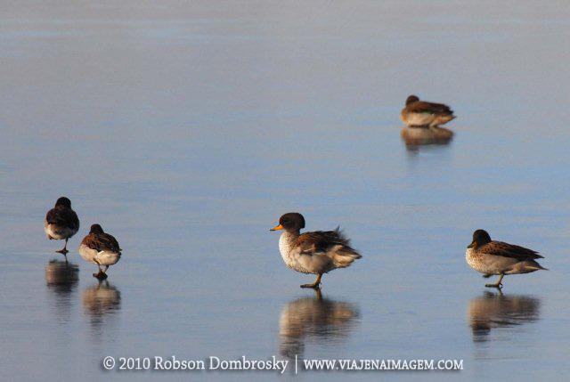 aves caminhando sobre lago congelado