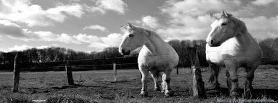 Couverture journal Facebook cheval noir et blanc