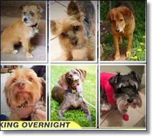 Picture of six dogs