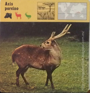 Blog Safari club, el Axis porcino, se parece mucho al Jabalí