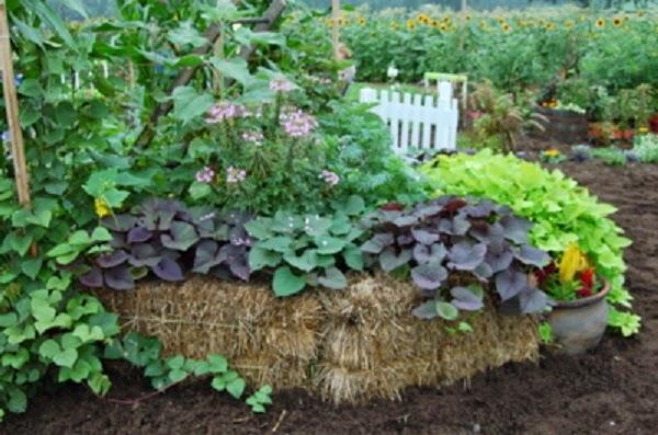 jeffco gardener huegelkultur  knew composting