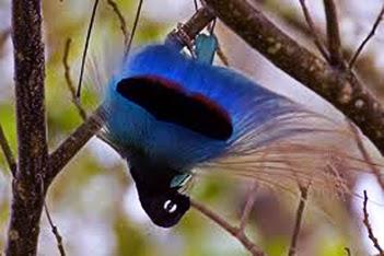 Blue Bird Display