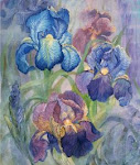 HAED QS Iris by J Wall