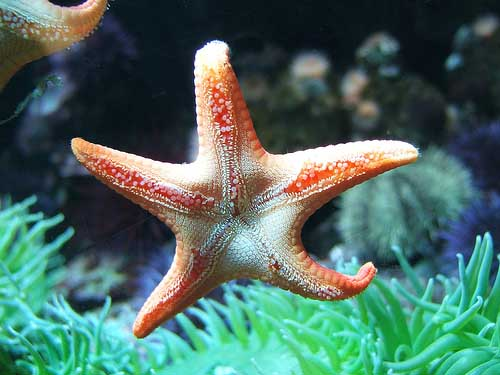 Weird Marine Sea Creatures Behaviors - Sea Starfish