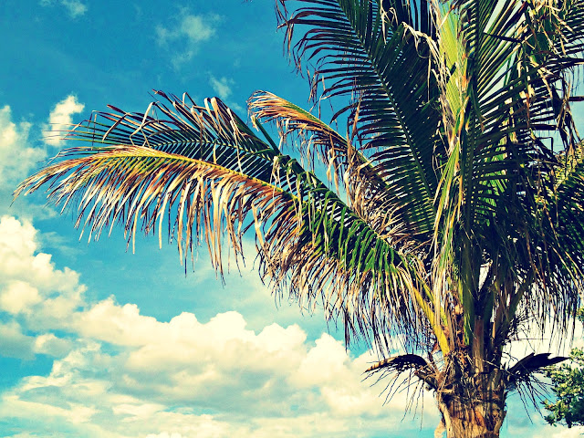 beach photography, coconut palm, palm tree, blue sky, beach bum chix