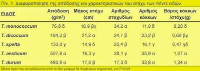 Συγκριτική αξιολόγηση πέντε ειδών σιταριού