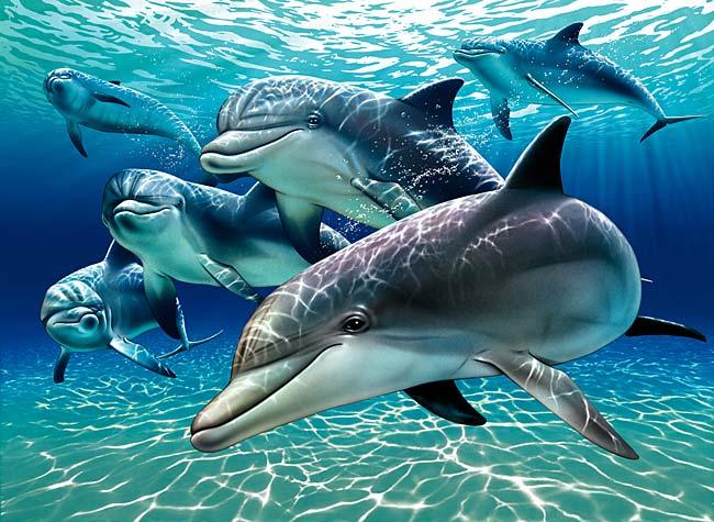 gambar lumba lumba