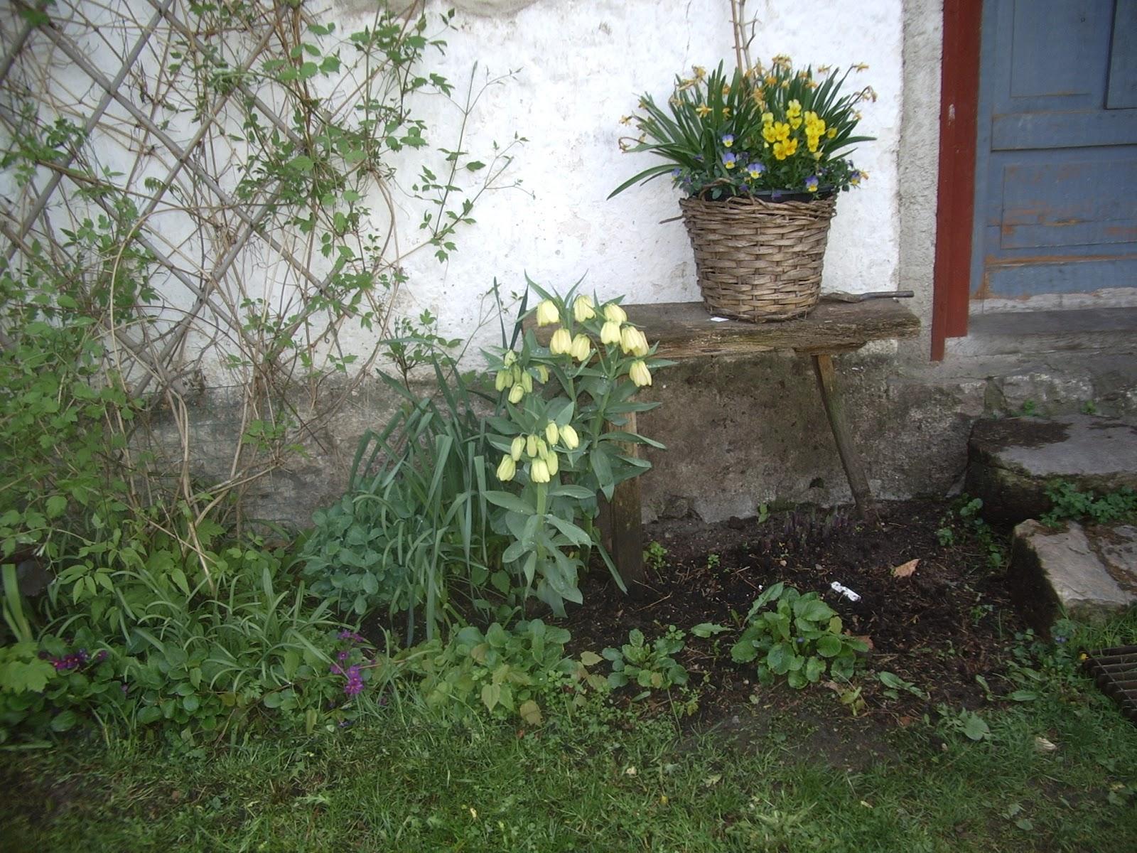 Mariehem i skåne: vårplanteringar