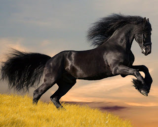 arabian+horse+wallpaper Make A Fire Horse In Photoshop Cs4