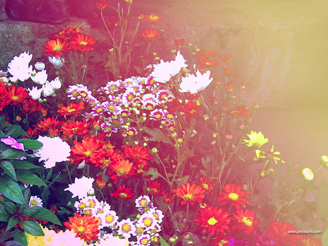 http://1.bp.blogspot.com/-eHJh2bK2MZw/UDcSogoID2I/AAAAAAAACsQ/xyeKWJHW5uk/s1600/Desktop-Wallpaper-Flowers.jpg